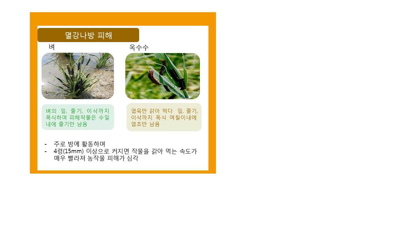 병해충발생정보(멸강나방)