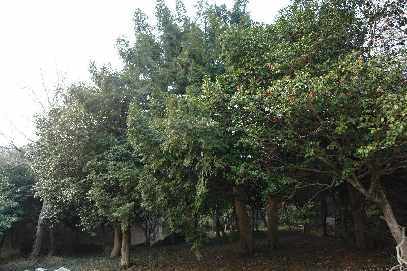 서동사동백비자숲.jpg