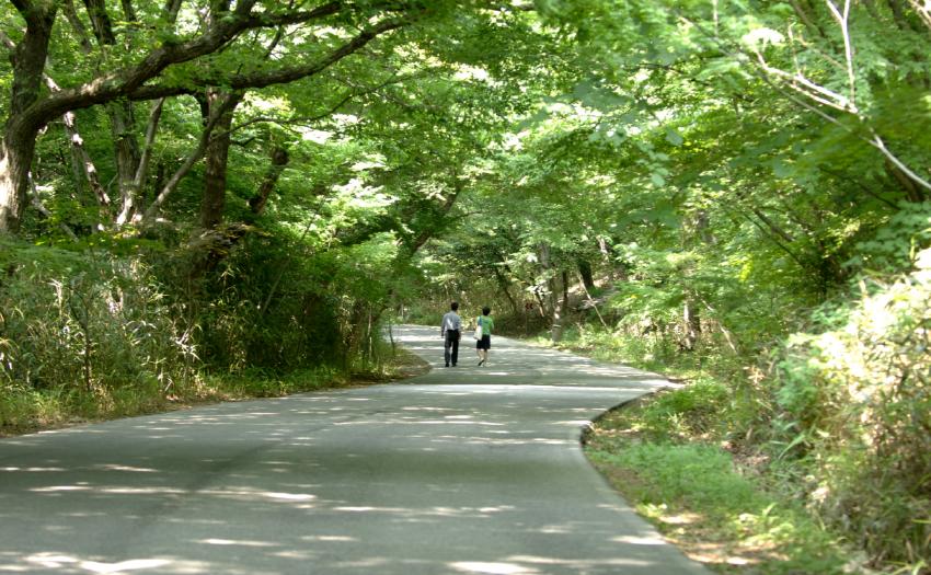 대흥사숲길.png