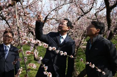 땅끝매화축제가 열릴 보해매실농원 현장점검