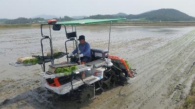 해남군, 추석 햅쌀용 조생종 벼 재배단지 50ha 조성