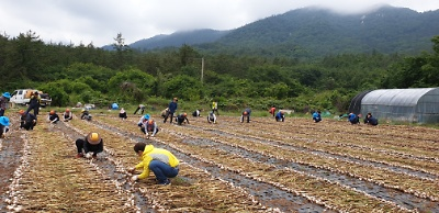 농촌일손돕기 지원