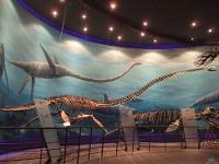 공룡의 낙원 - 해남우항리공룡화석지(박물관)
