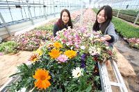 화사한 봄맞이, 봄꽃들...